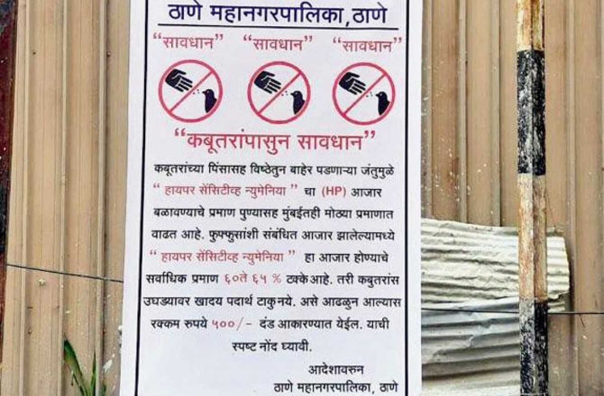 Thane: TMC to impose fine of Rs. 500 on residents for feeding pigeons
