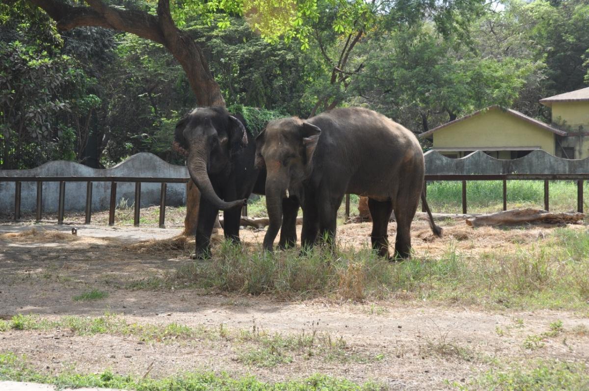 Anarkali remains the lone 'Rani' at Byculla Zoo