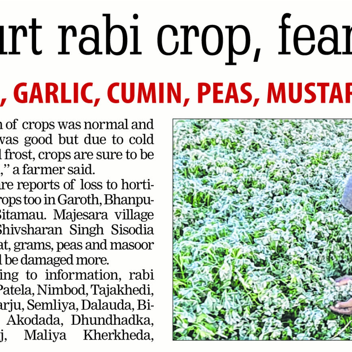 Madhya Pradesh: Frost fright in Mandsaur: Survey of 2 lakh hectare begins