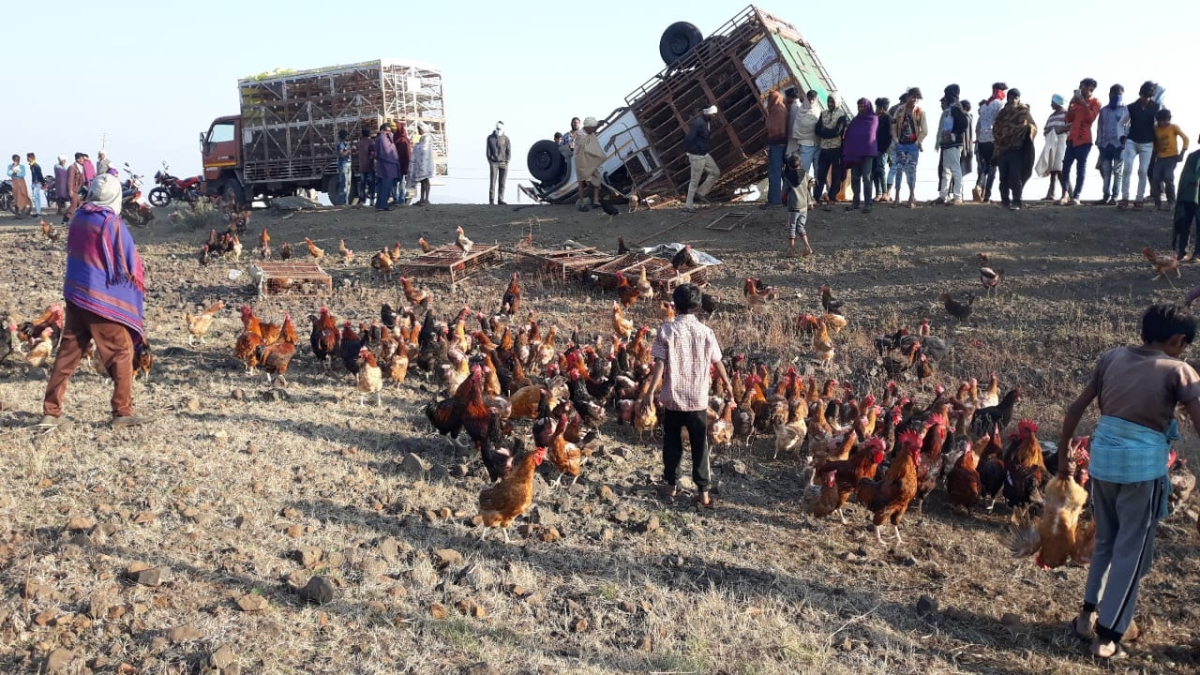 Chickens near overturned truck in Sendhwa tehsil