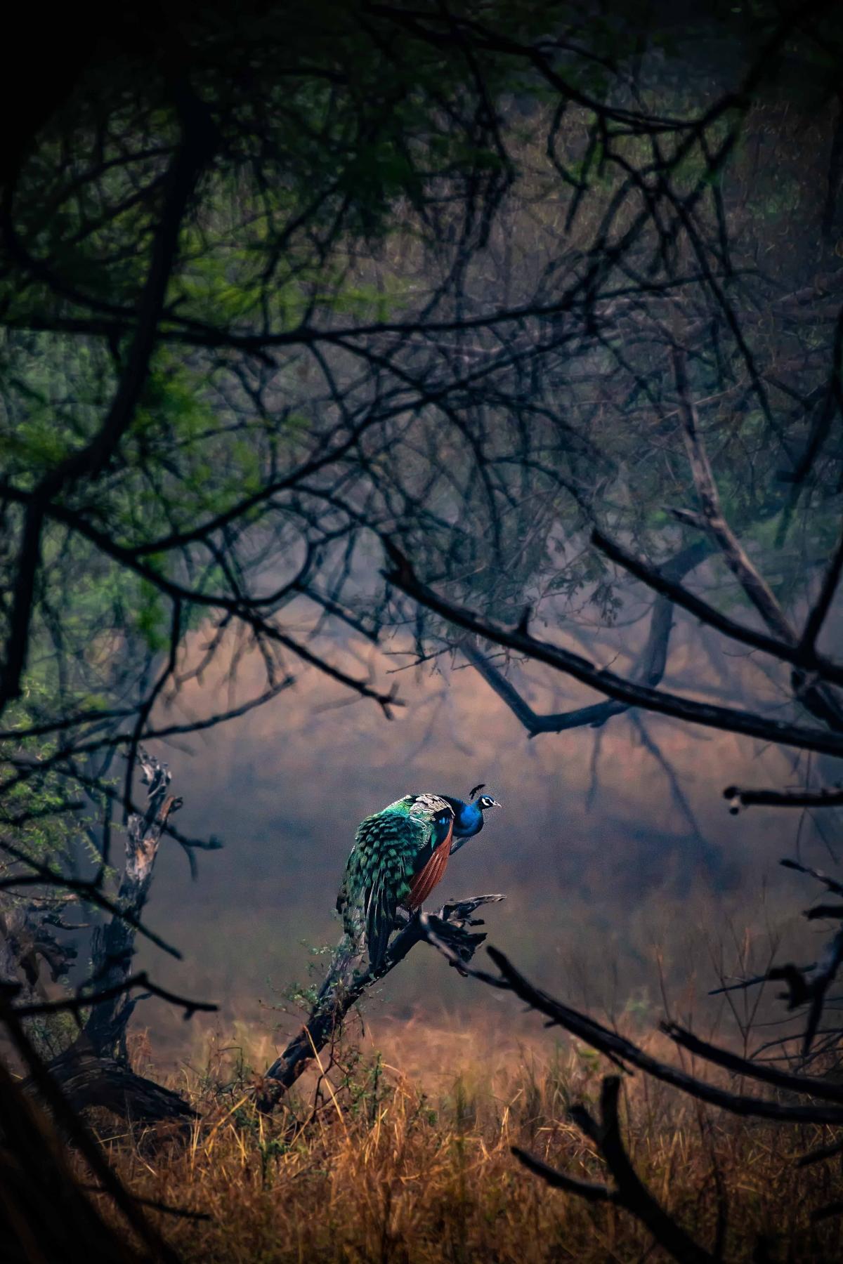 Pic by Rahul Kahar