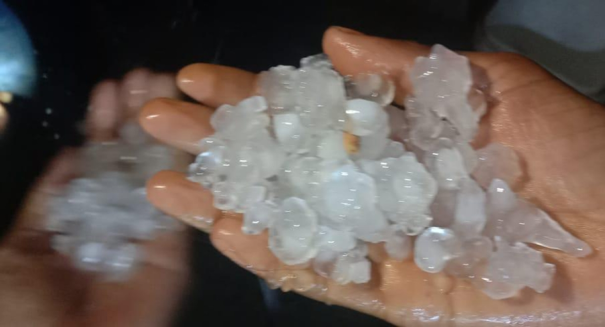 Madhya Pradesh: Double whammy for Mandsaur farmers, first it was frost and then came hailstorm
