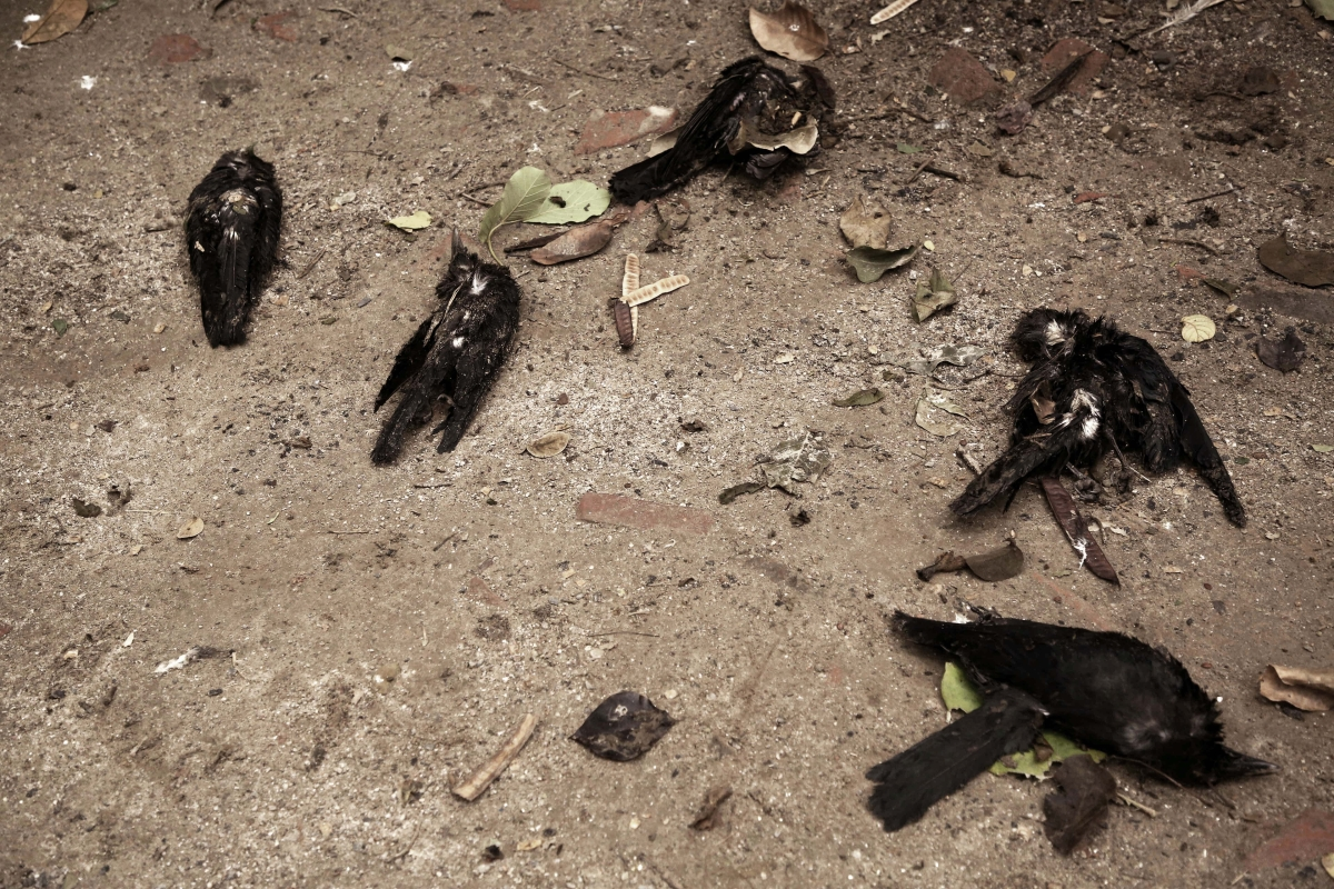 Crows died around due to Bird Flu at an MCD Park of Mayur Phase 3, in New Delhi on Friday