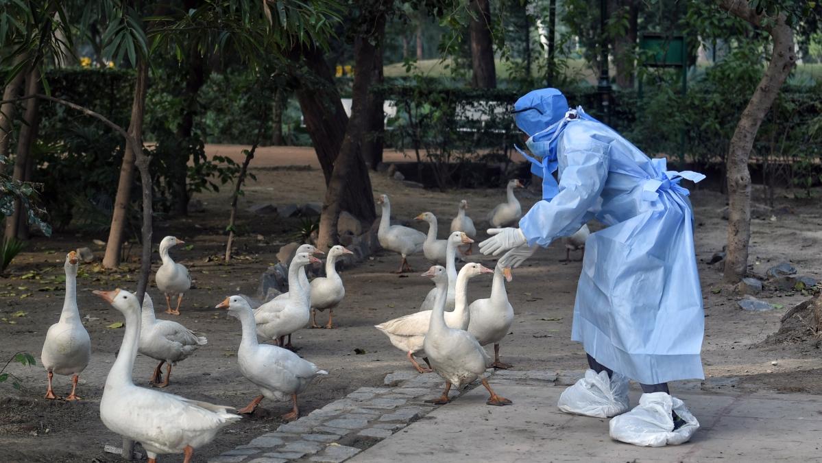 Bird flu outbreak in Maharashtra: Thane civic body sets up control room