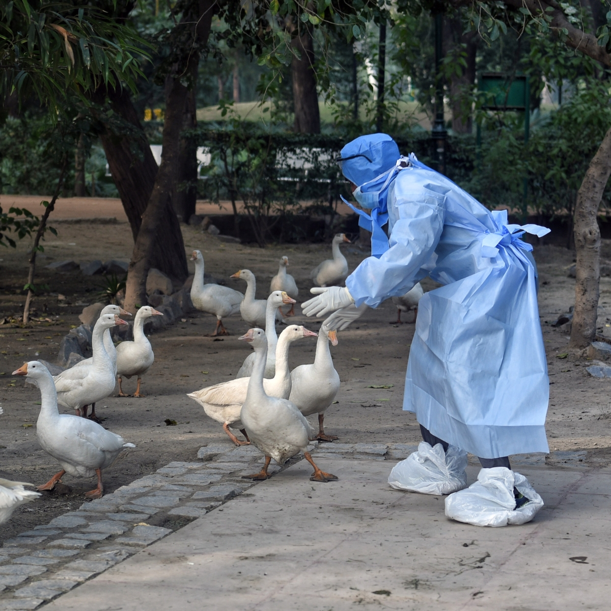 Shiv Sena slams BJP over bird flu, asks if Pak, Khalistanis behind outbreak