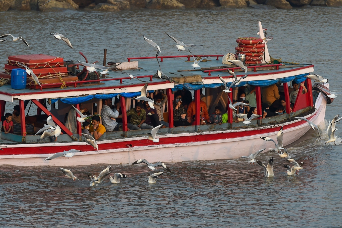 Bird flu in Maharashtra: Rapid response teams sent to affected districts