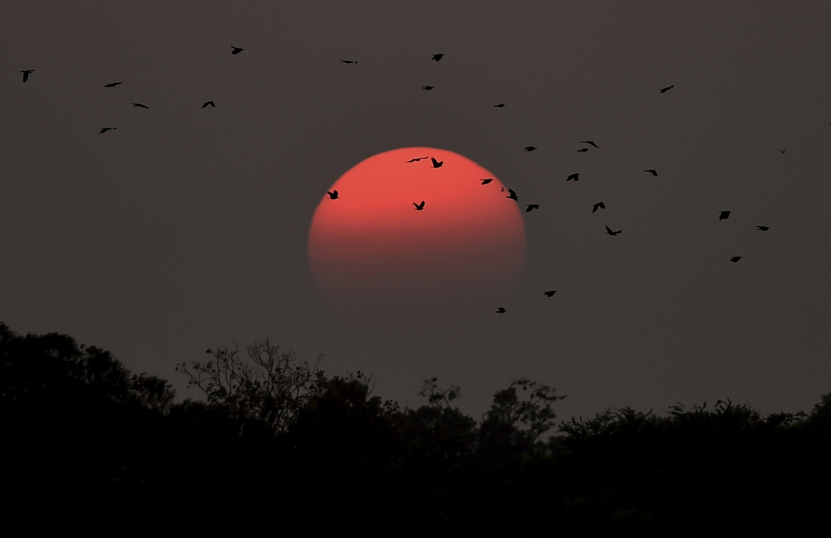 Bird flu in Maharashtra: 302 birds, including 269 poultry birds, dead