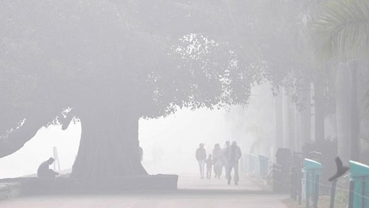 Madhya Pradesh: Thick fog greets early risers in Bhopal, visibility reduces to 500 metres at several places