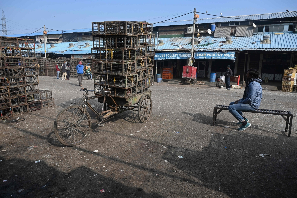 Bird flu confirmed in Delhi, all 8 samples sent to Bhopal lab tested positive