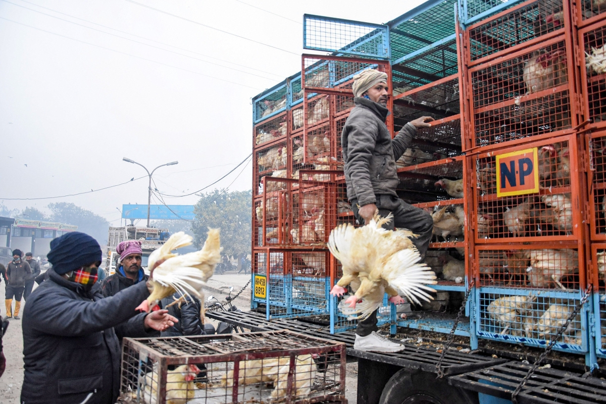 Avian flu in Maharashtra: No bird flu in Pune yet