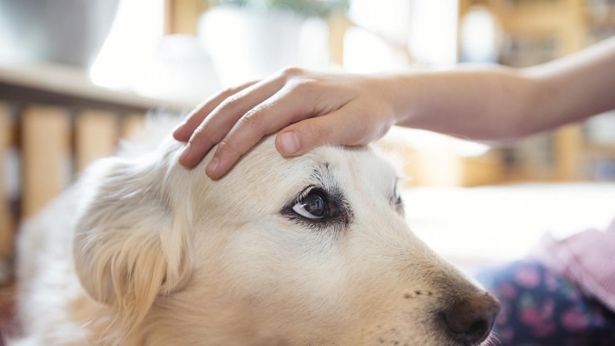 Pet food sales soar 20 pc in 2020 as pet adoption increased during lockdown