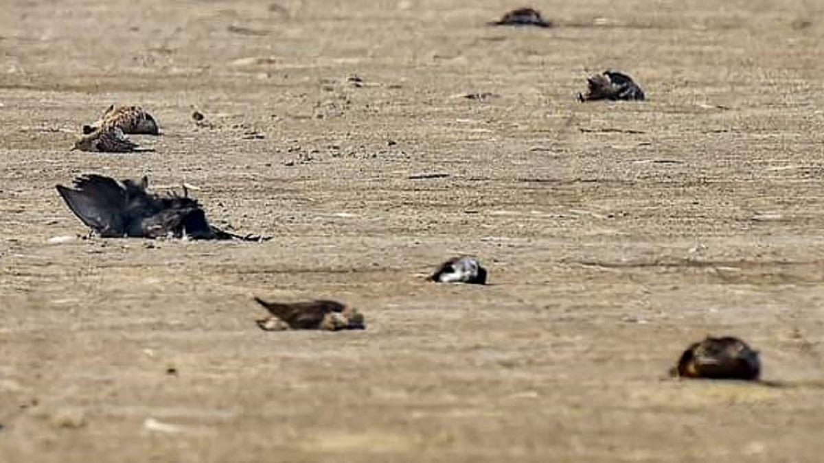 Bird flu alert in Rajasthan after over 250 crows found dead
