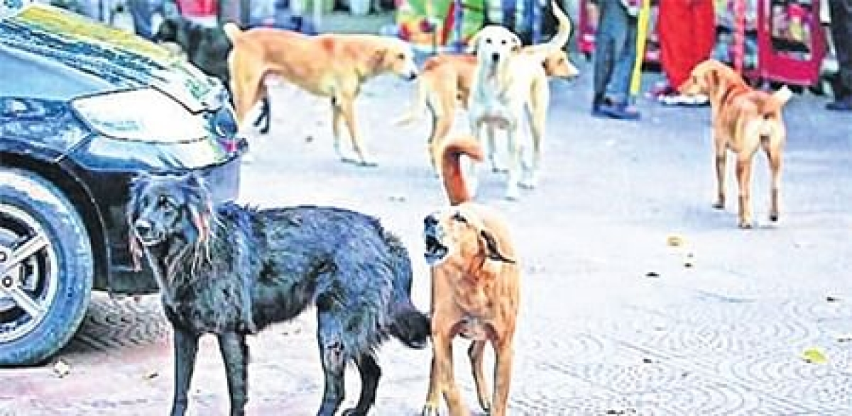 BMC's dog sterilisation drive jumps from Rs 2.38 cr to Rs 13.39cr