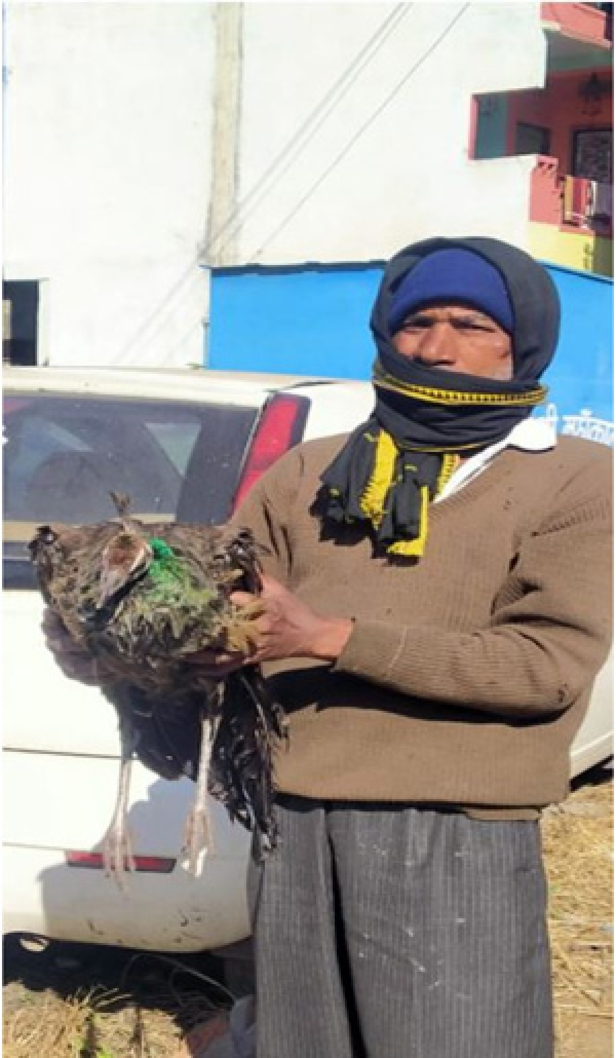 Indore: How FRV cops saved a pea fowl