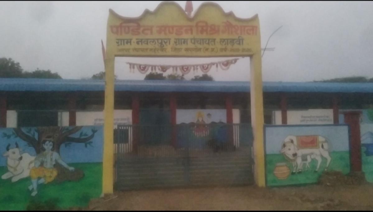Madhya Pradesh: Cow starves to death at Rs 28 lakh gaushala near Mandleshwar