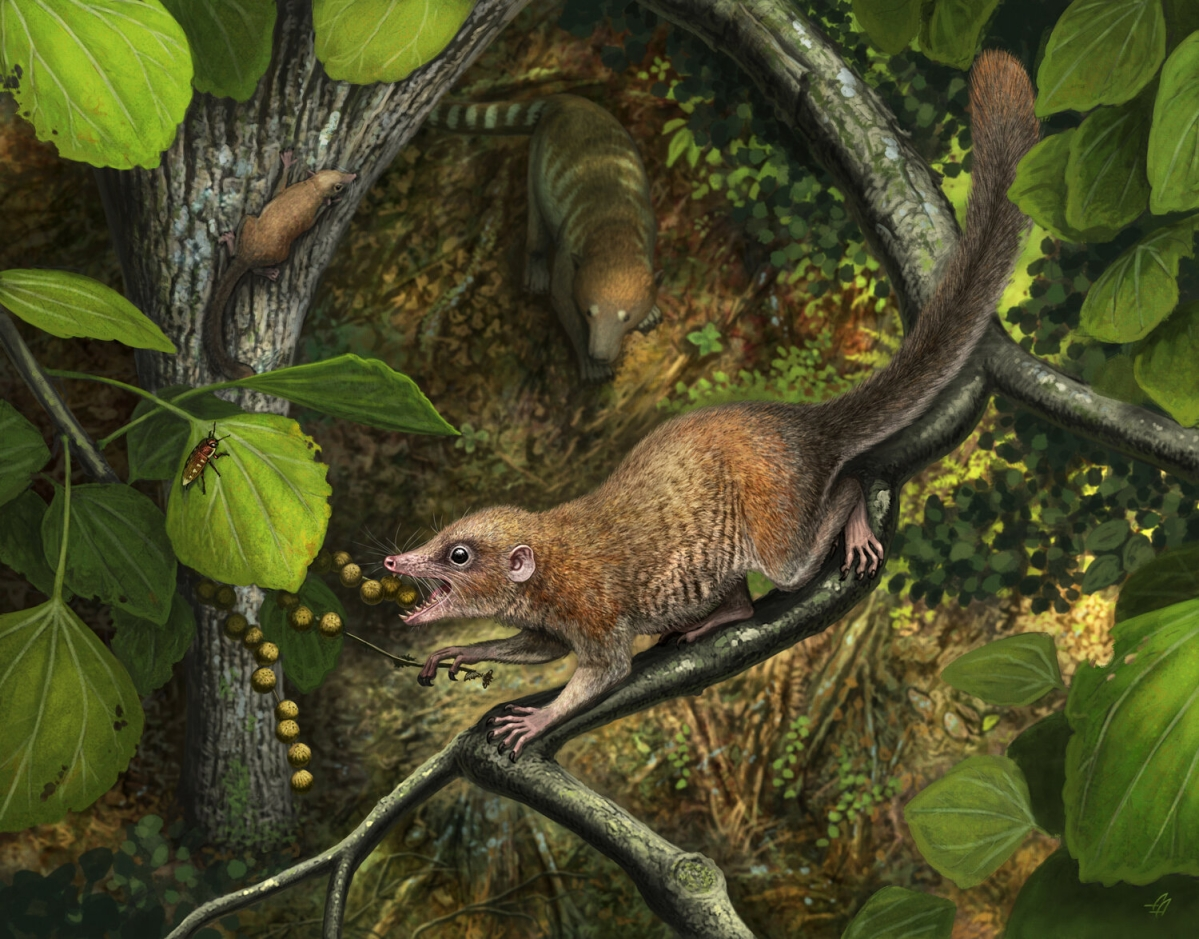 Earliest primate fossils documented, shed light on rise of mammals