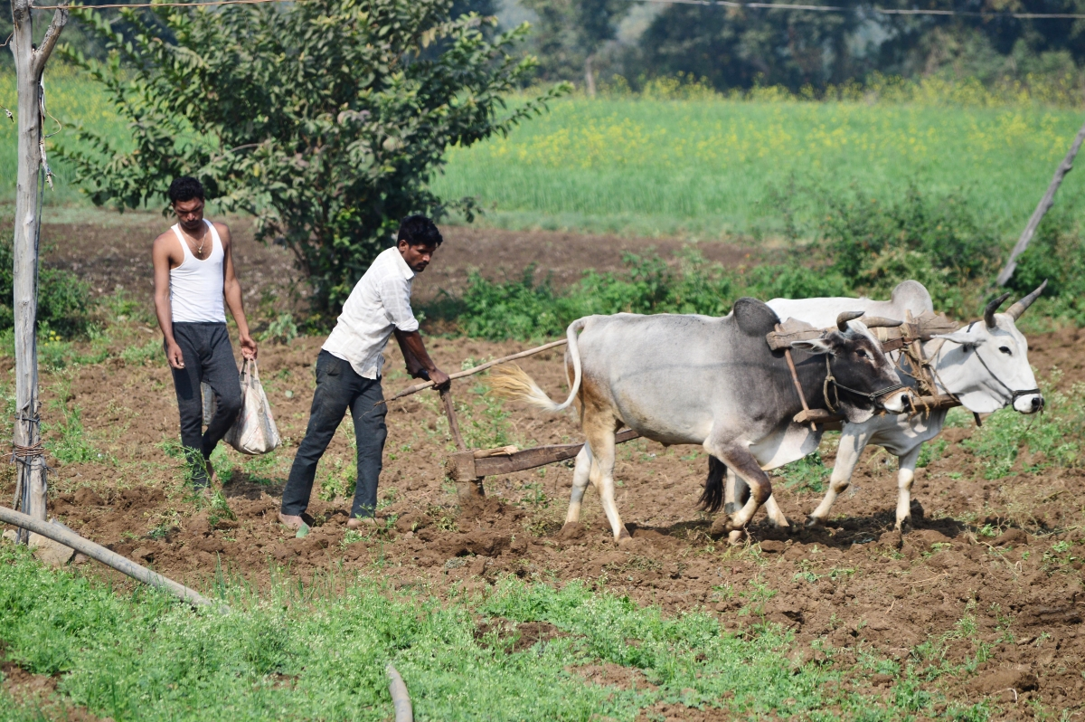 Madhya Pradesh: Can't default on paying farmers their due crop insurance amount, banks and cooperative officials told