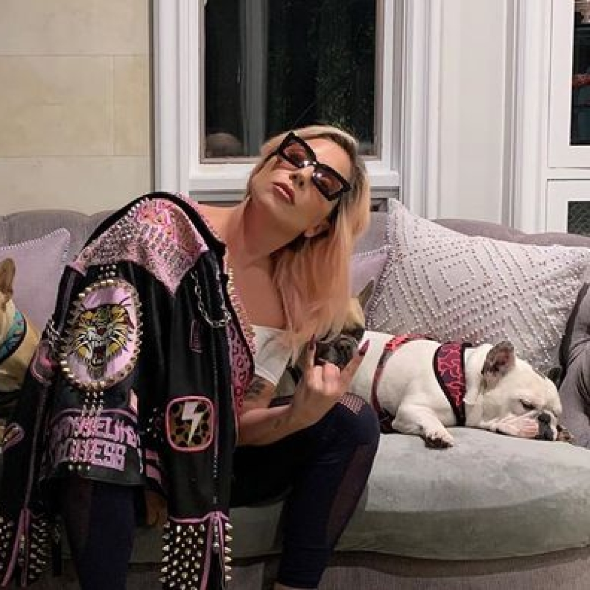 Lady Gaga's dogwalker shot four times in the chest, dogs stolen; singer offers Rs 3.62 crore to anyone who finds them