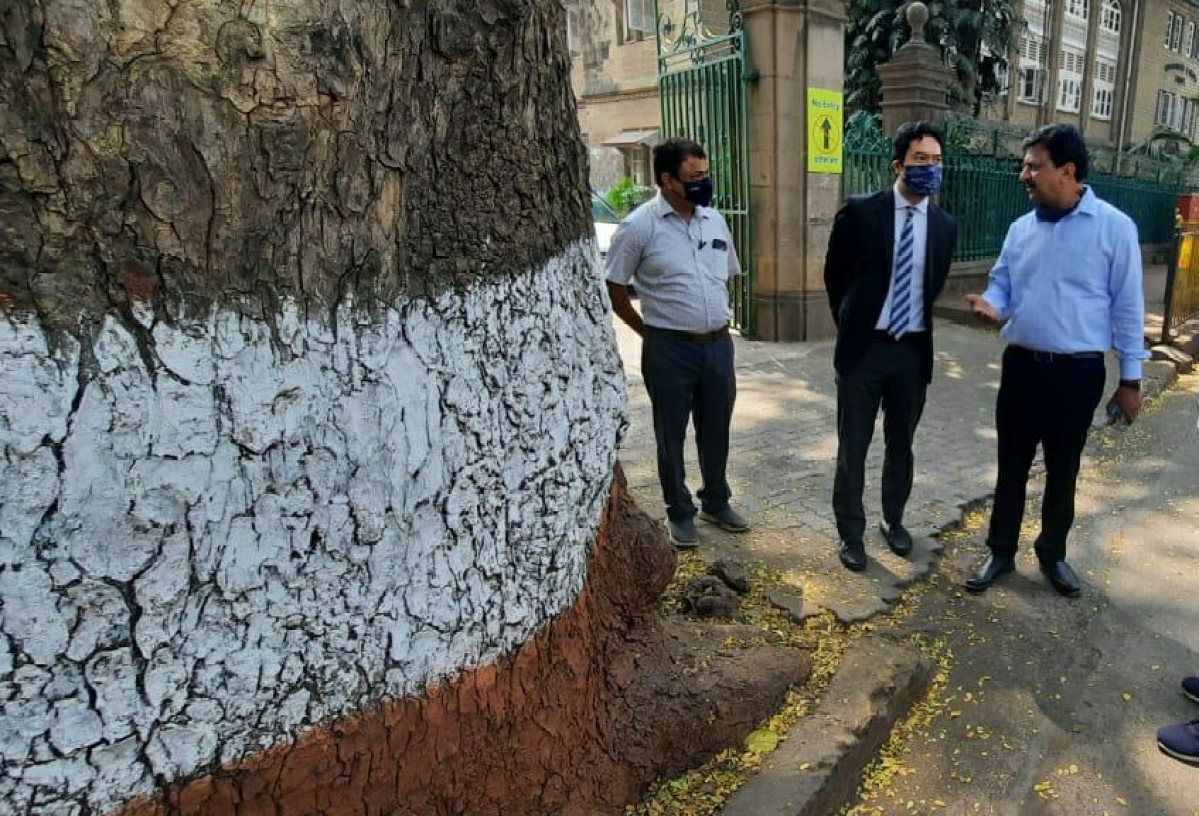 Malaysia to study painting tree trunks in red and white