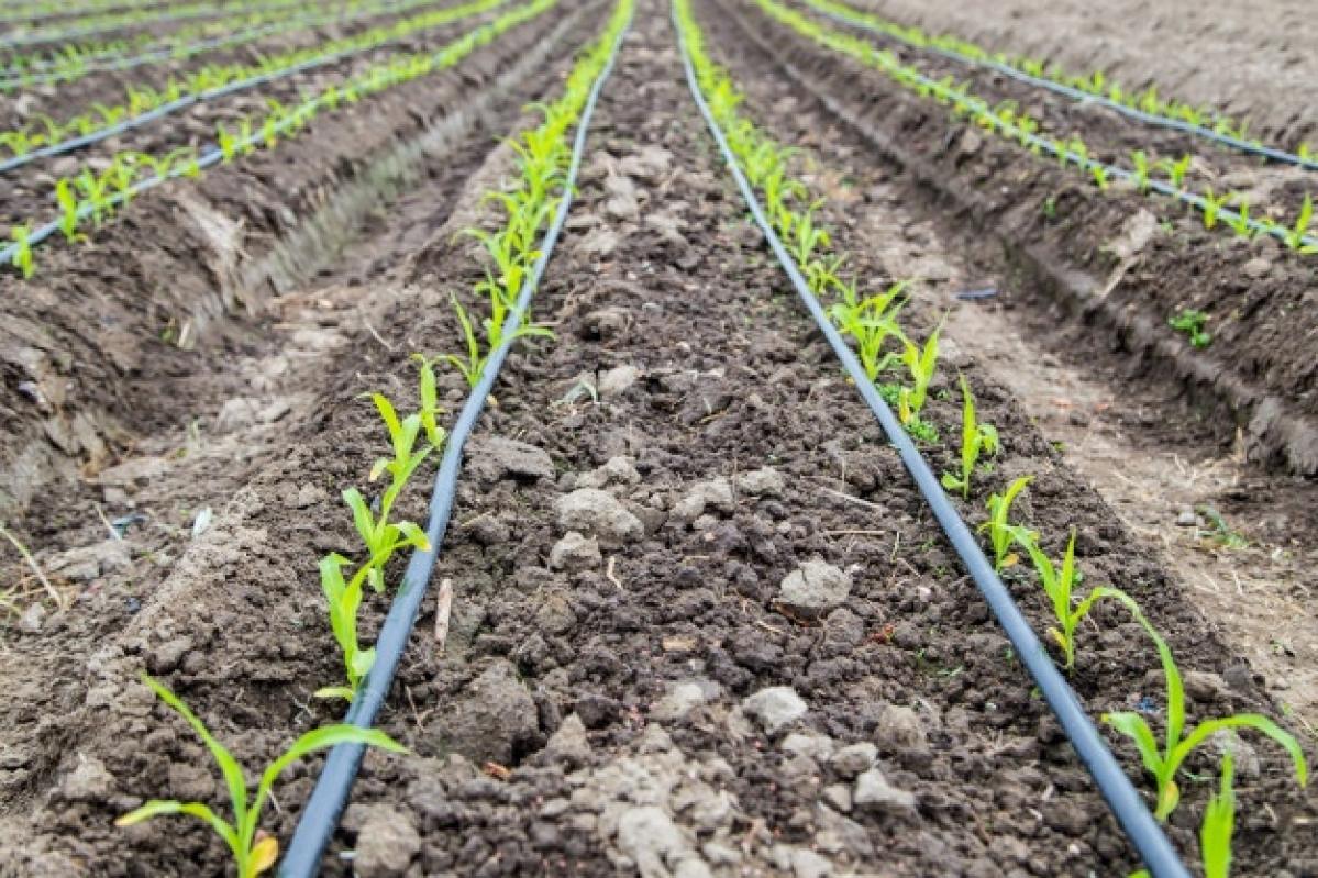 Chhattisgarh: Sluggish agro-economy fuelling farmer suicides, warn experts