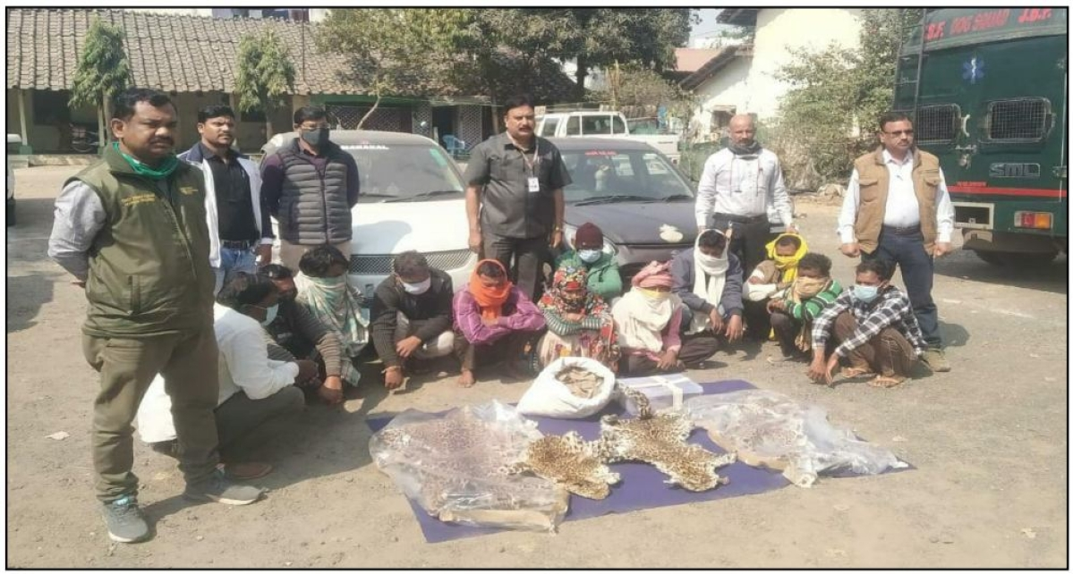 Forest dept teams with confiscated leopard skin and pangolin scales