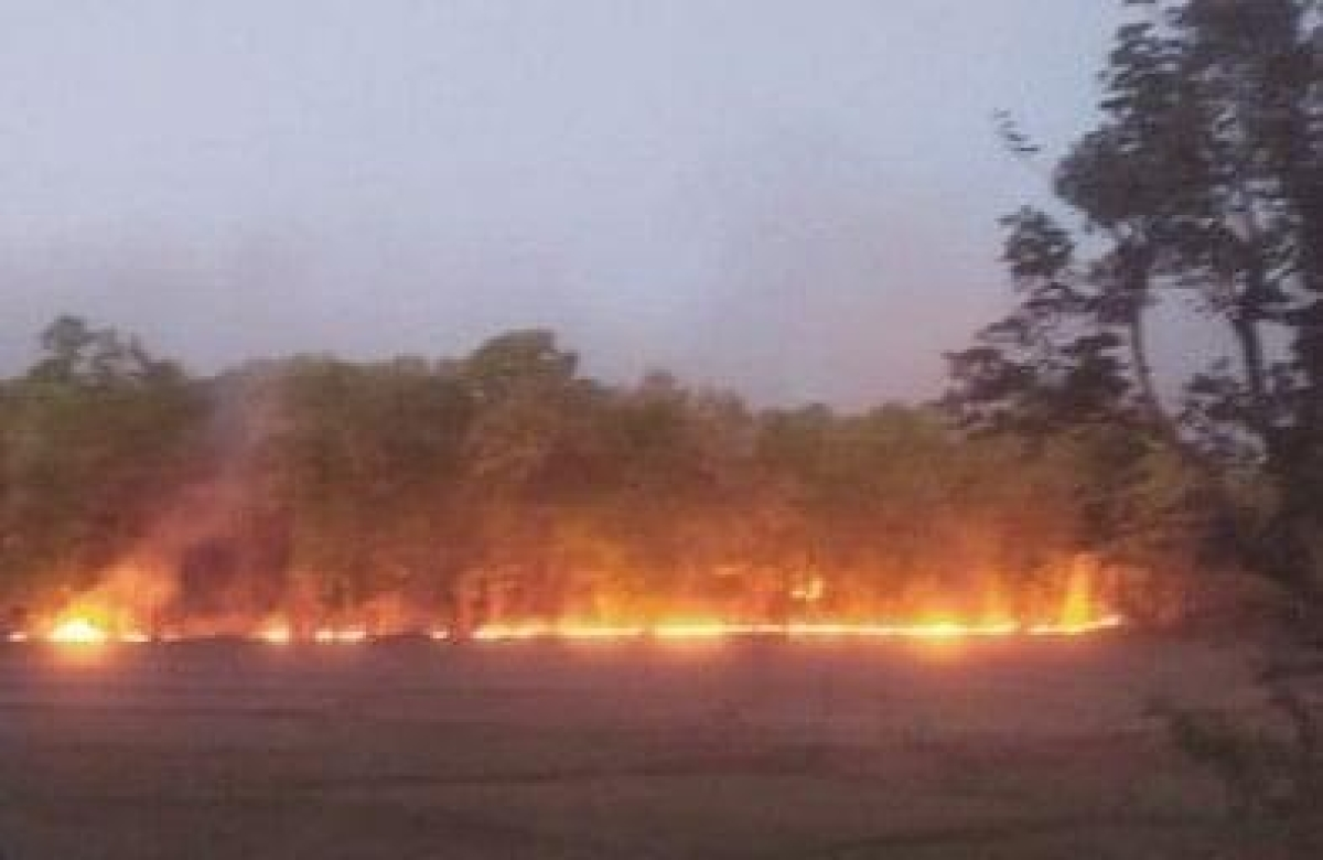 Madhya Pradesh: Fire in Bandhavgarh Tiger Reserve; CM asks forest officials to ensure all steps for safety of animals & forest