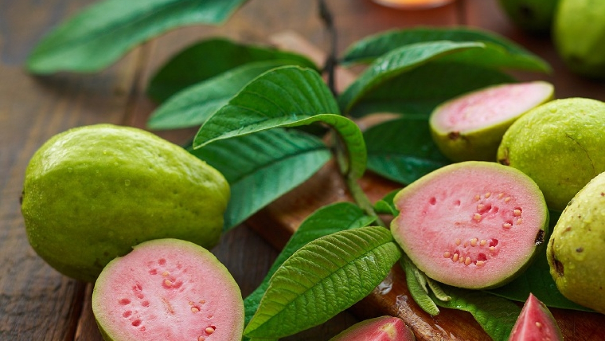 Guava roots can help fight diabetes: Research