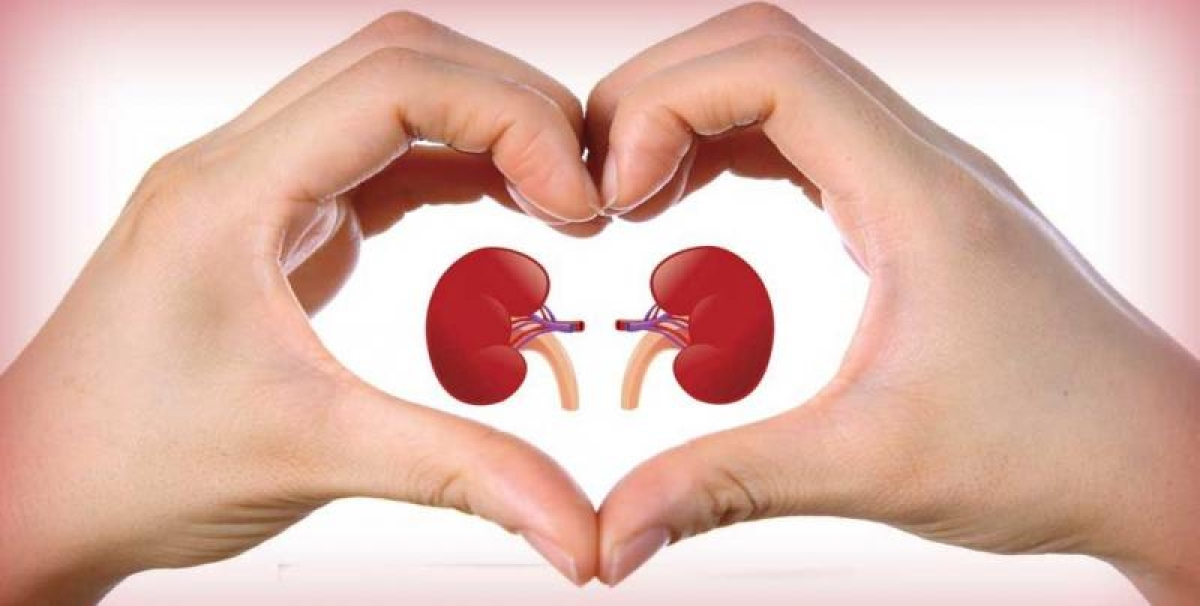 Foods that can keep help boost your kidney health