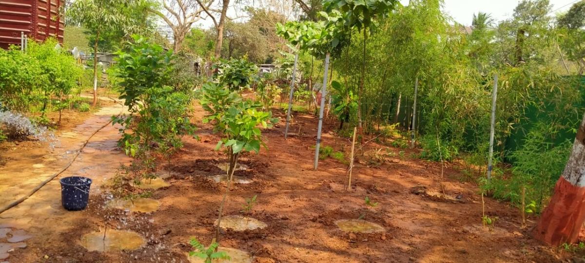 Central Railway's herbal garden at CSMT