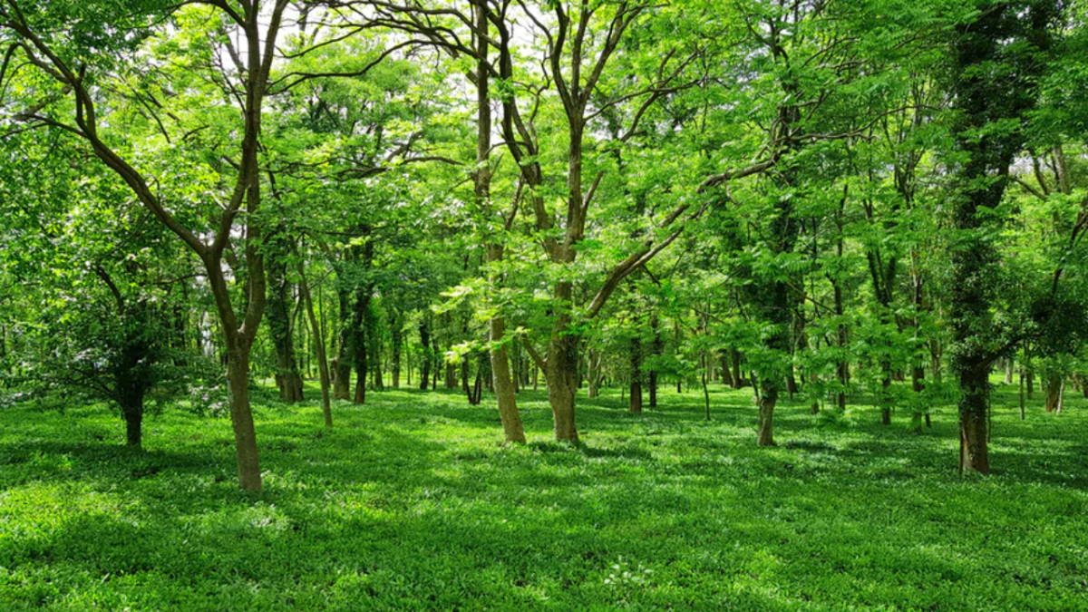 Nature lovers are uniting on Twitter to celebrate International Day of Forests