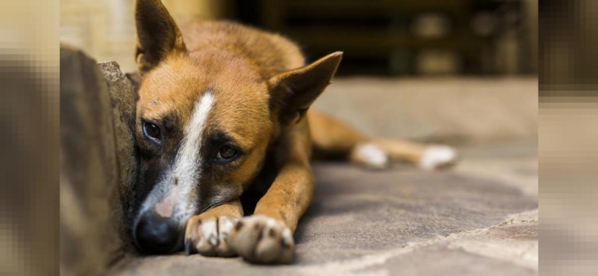 Mumbai: Man sodomises female dog in Andheri, held
