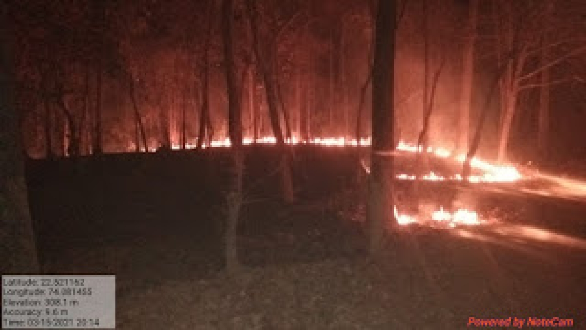 Alirajpur: Forest fire cause restlessness among tribals as forest department lacks fire fighting equipment