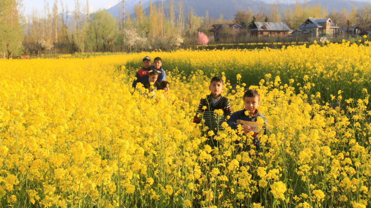 Kashmiri children walk through the mustard field on the outskirts of Srinagar, Kashmir.