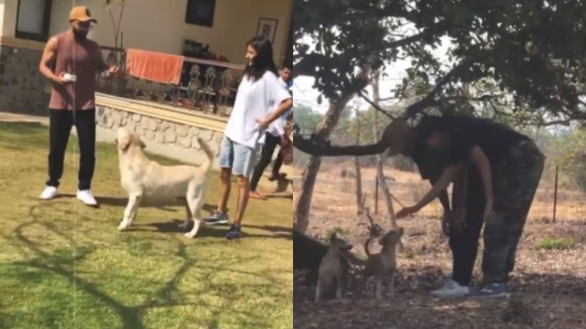 Watch: Anushka Sharma shares glimpse of 'special, priceless moments' with Virat Kohli and furry friends