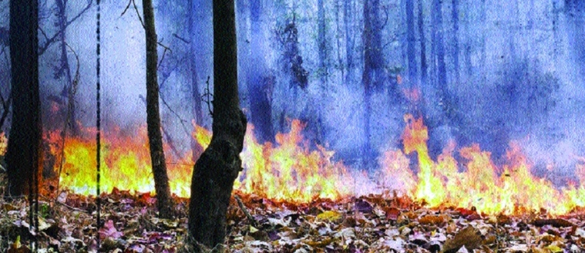 Madhya Pradesh: Fire in Nauradehi forests is uncontrollable even after a week