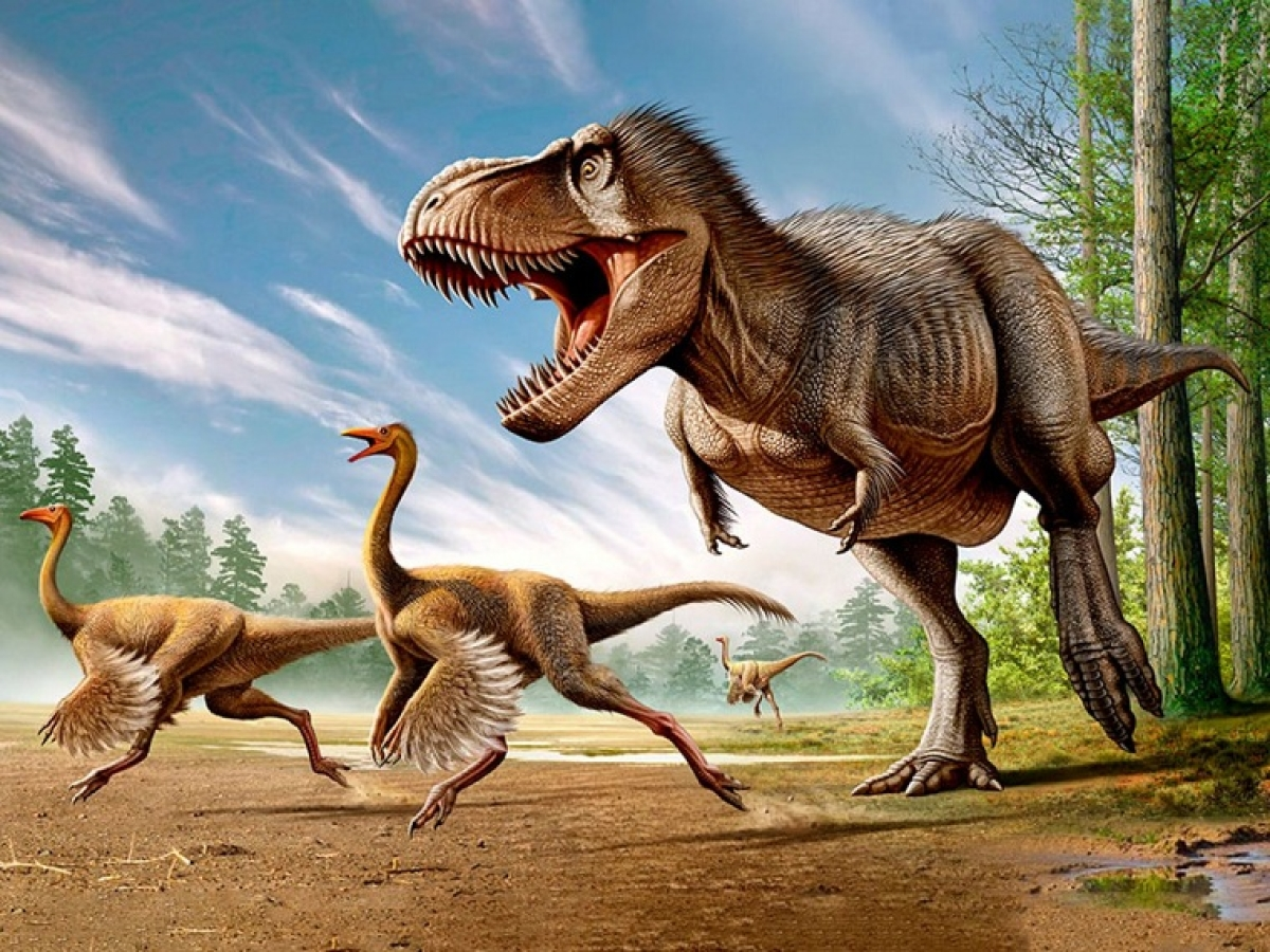 Massive 'Dinosaur dance floor' unearthed in China