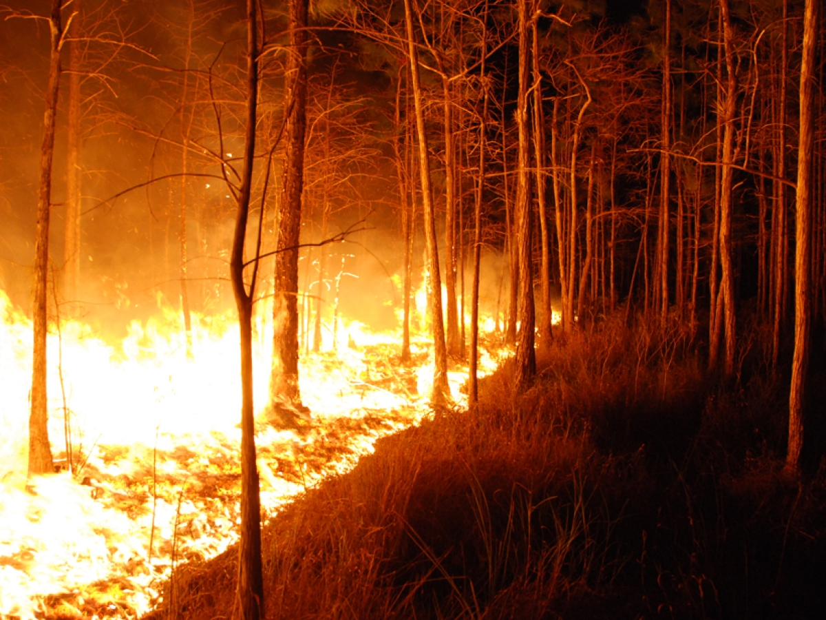 Madhya Pradesh reports highest Visible Infrared Imaging Radiometer Suite alerts, over 28,000 forest fires in country