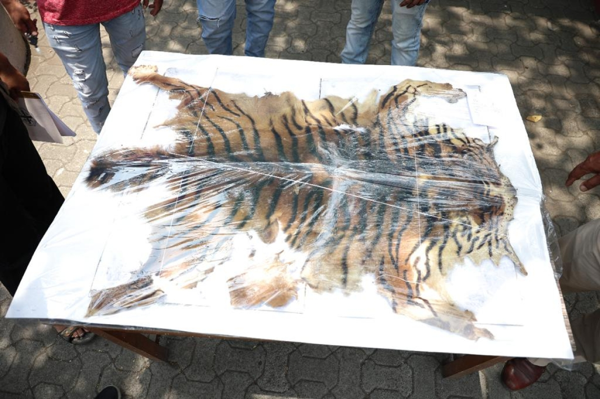 Thane: Four arrested for smuggling tiger skin and nails in Bhiwandi