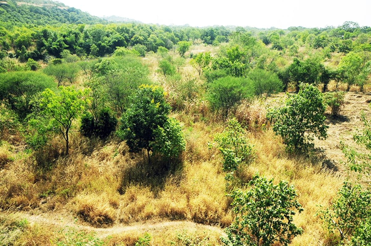 Bhopal: Sacred groves of Rajasthan, Oran, on display at IGRMS