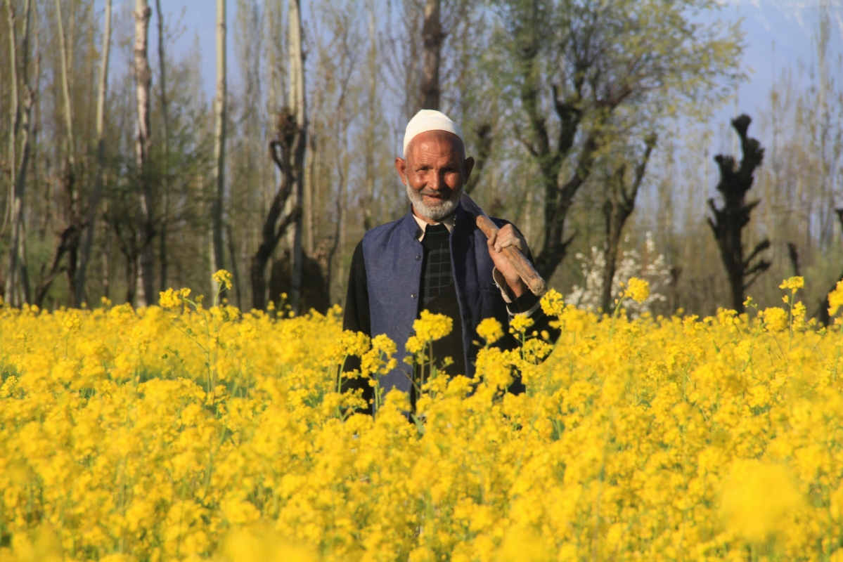 Old Kashmiri man poses for a picture in the blooming mustard fields on the outskirts of Srinagar, Kashmir.