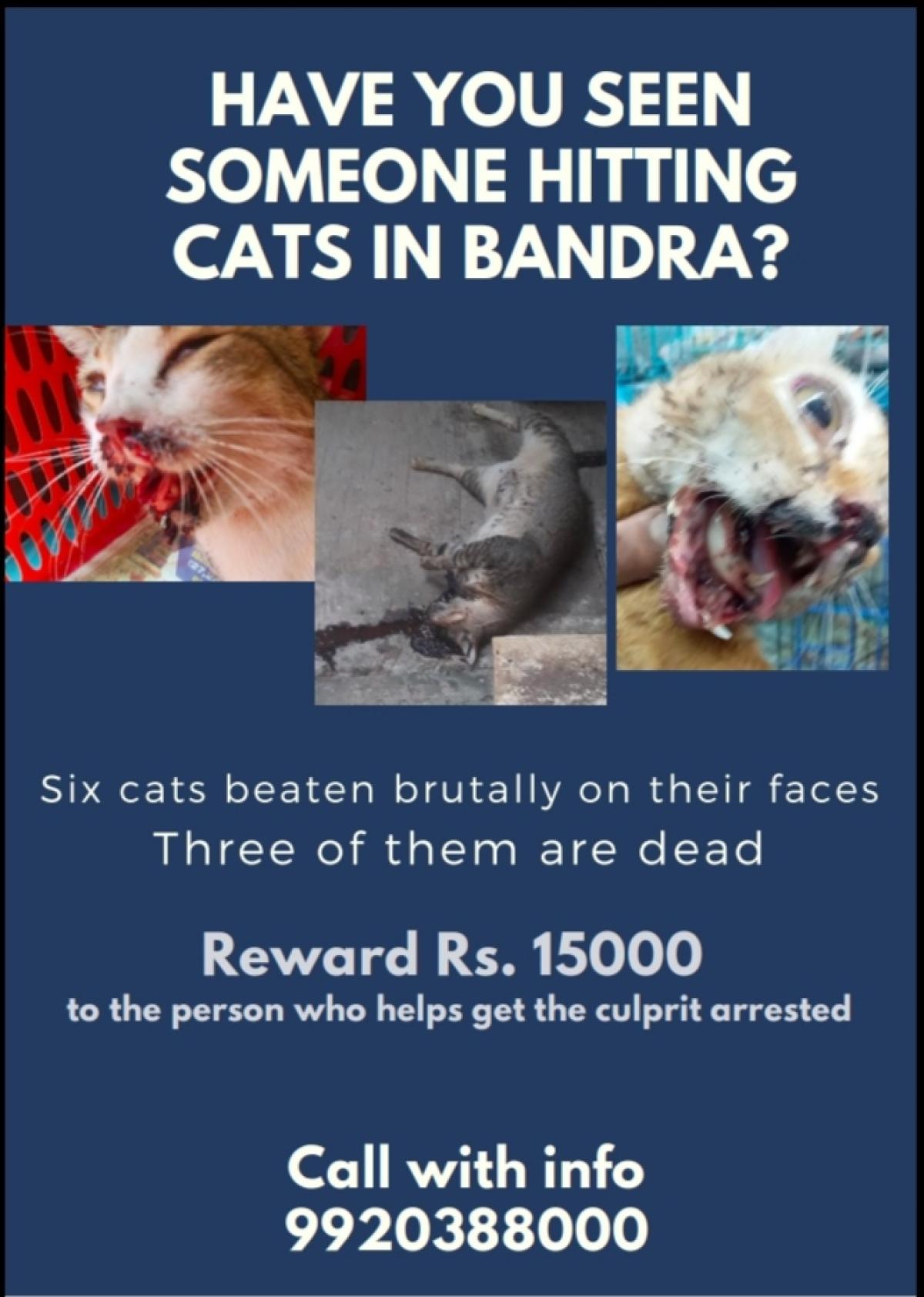 Mumbai: Mysterious person breaks jaws of 5 felines in Bandra, 3 die