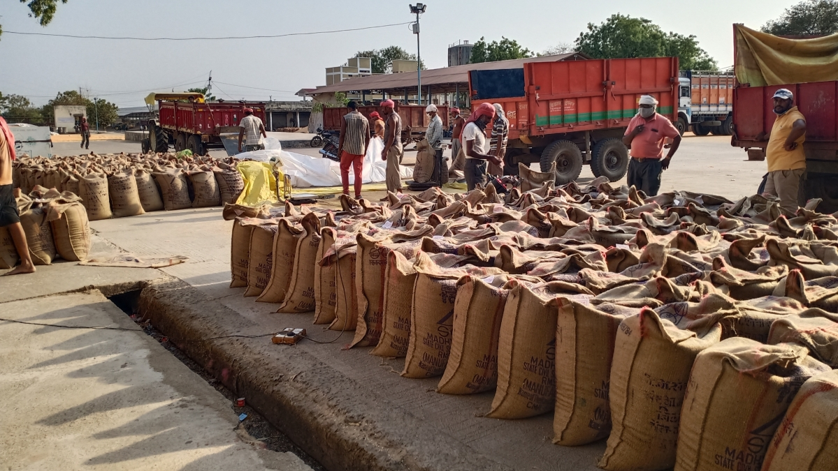 Madhya Pradesh: Wheat procurement at Khetia situated service cooperative society surges