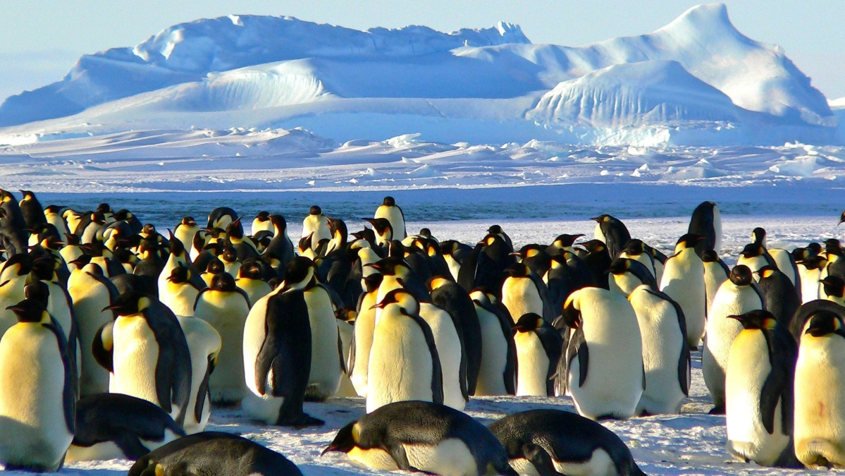 World Penguin Day 2021: Lesser known facts about the extraordinary bird