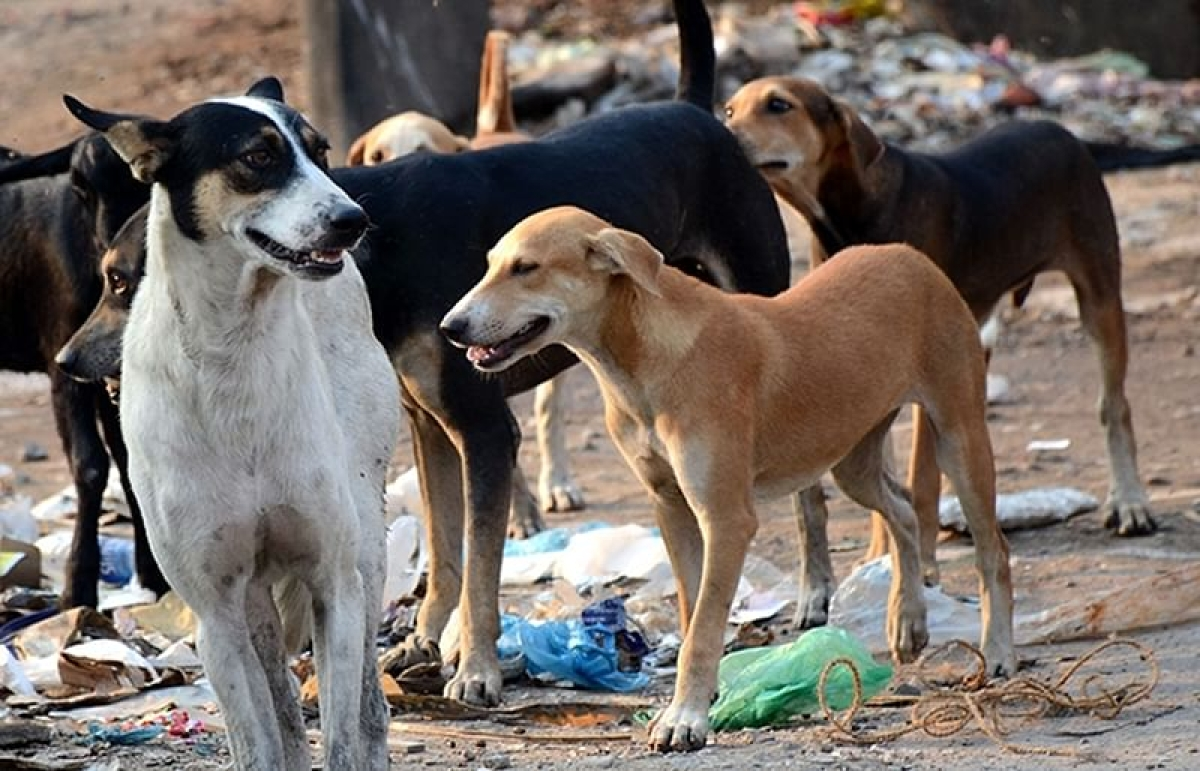 Mumbai: BMC to appoint more NGOs to tackle stray dog menace