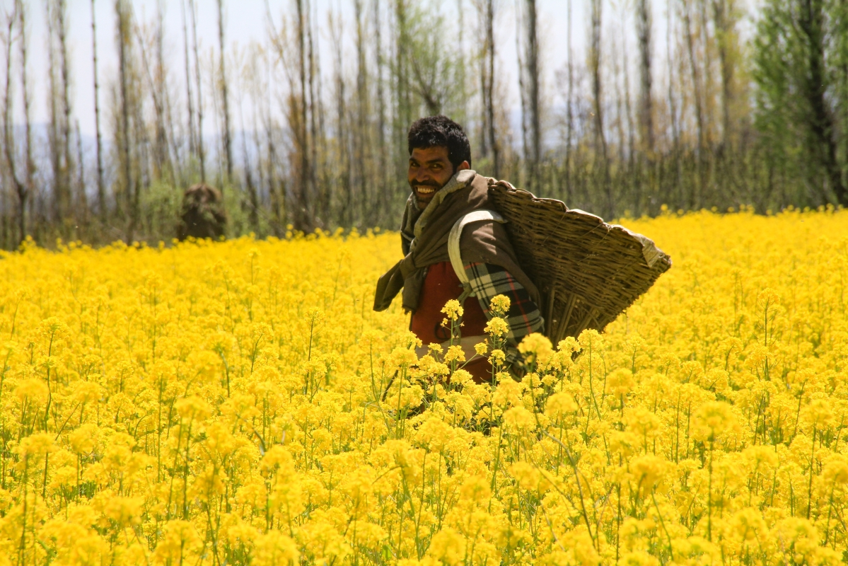 Kashmiri young man poses for a photograph in the blooming mustard fields on the outskirts of Srinagar, Kashmir.