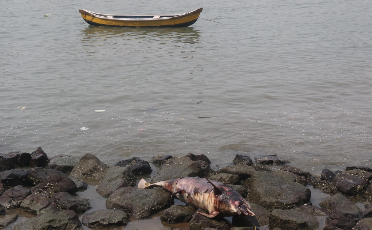 Mumbai: Carcass of Indian Ocean humpback dolphin found near Cuffe Parade