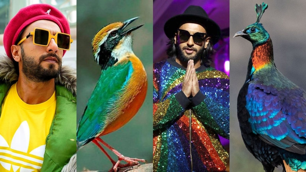 Twitter user reimagines Ranveer Singh as colourful Indian birds, pictures go viral