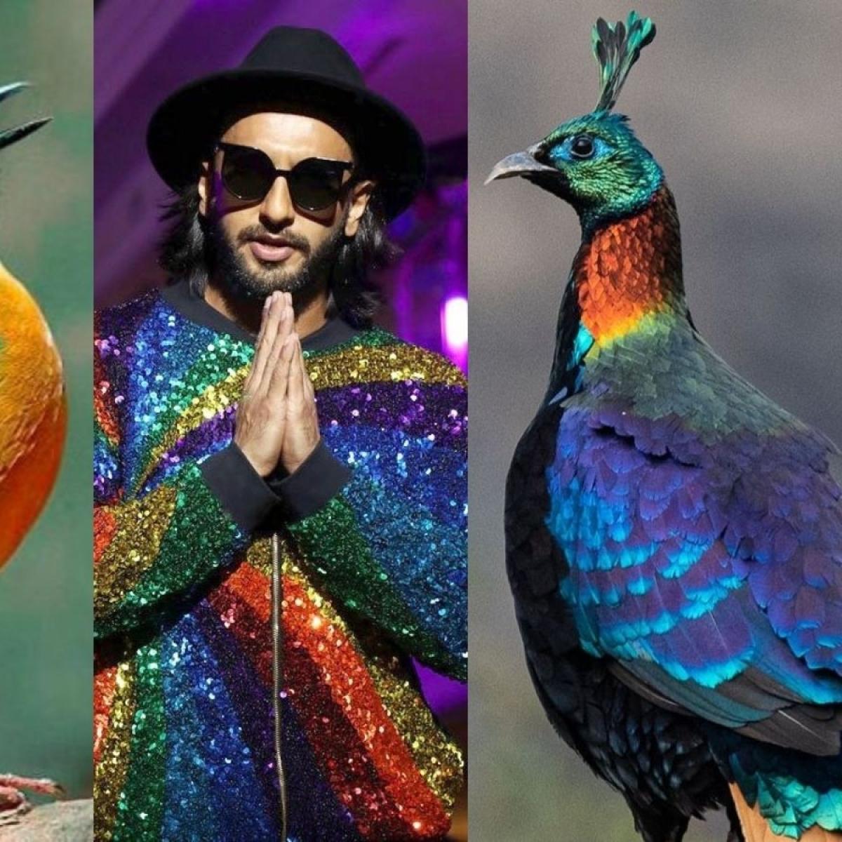 Twitter user reimagines Ranveer Singh as colourful Indian birds, pictures go viral