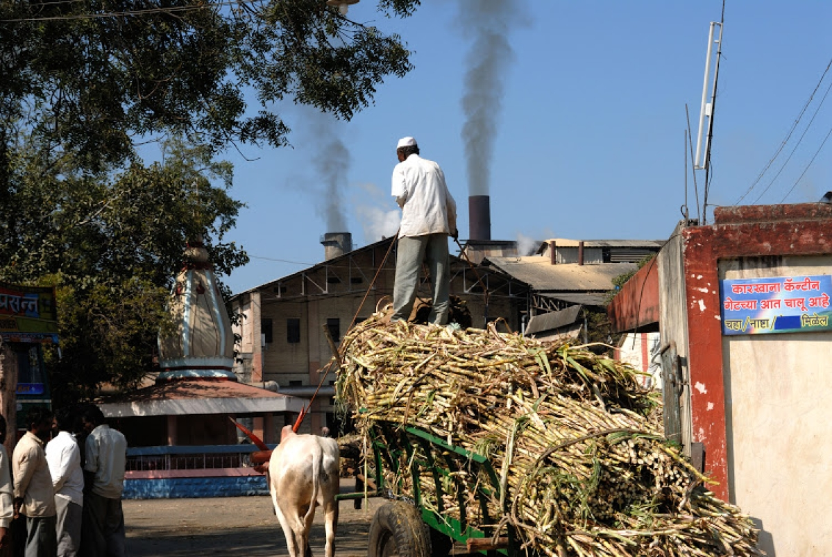 COVID-19 in Mumbai: Sharad Pawar asks sugar factories and distilleries to produce oxygen