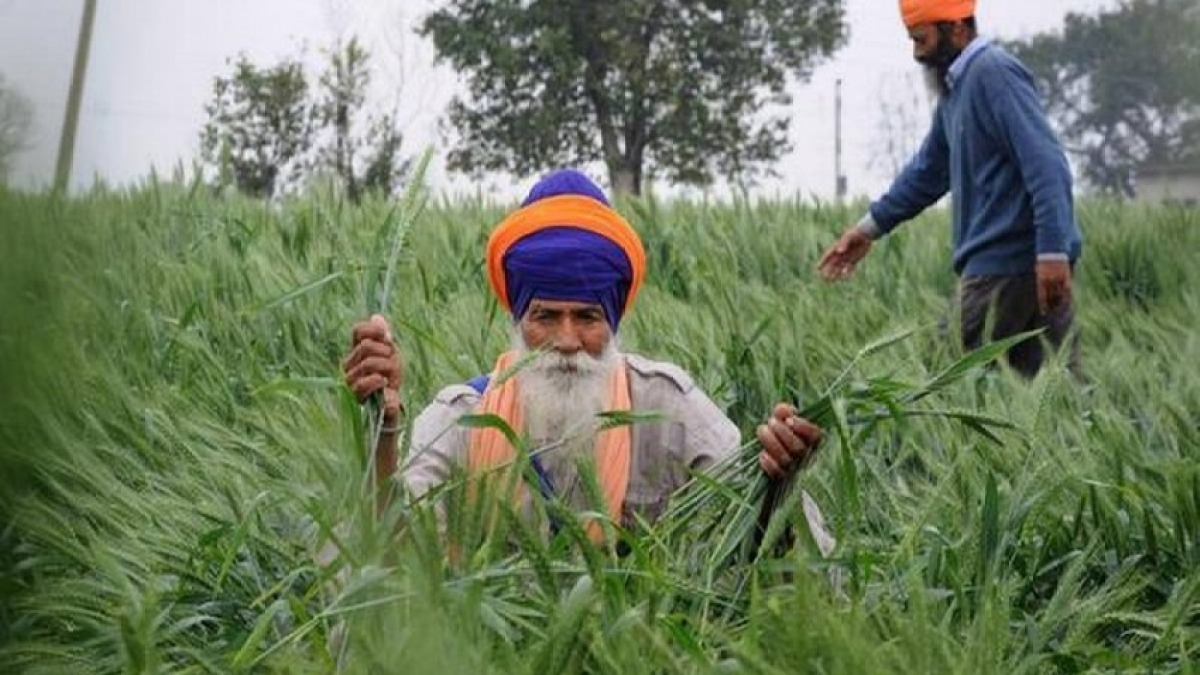 Punjab govt agrees to implement DBT for farmers from April 10